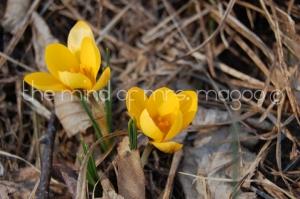 flowers31