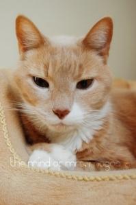 kittyblog